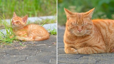 這些年你好嗎?舊地重遊遇「3年前小橘貓」,暴肥三圈只有悠哉沒變