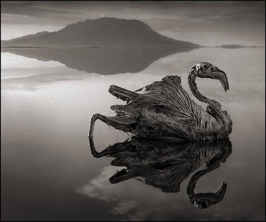 真實的冥河!坦尚尼亞「石化湖」 動物泡水變雕像