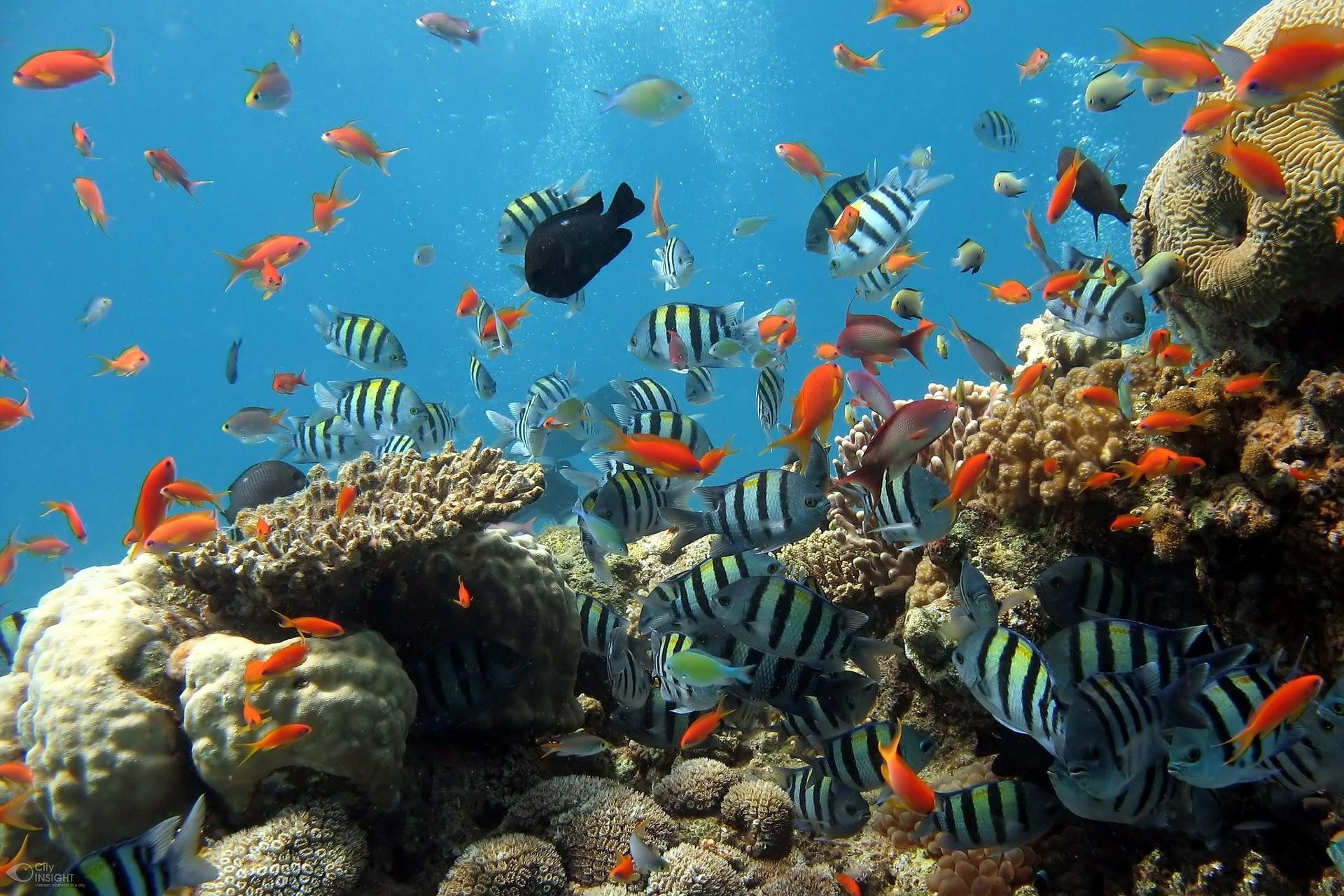 ▲海,魚。(圖/取自免費圖庫Pixabay)