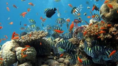 防曬乳毒殺珊瑚! 研究曝無奈事實:觀光越發達,它們死得越快