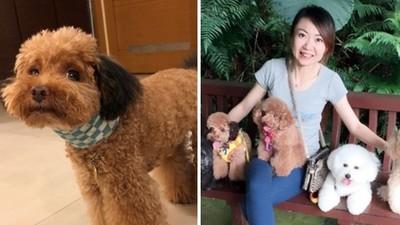 毛孩頸椎脫臼「照護費一次6000」 飼主感謝寵物保險挺過難關、守住狗寶貝