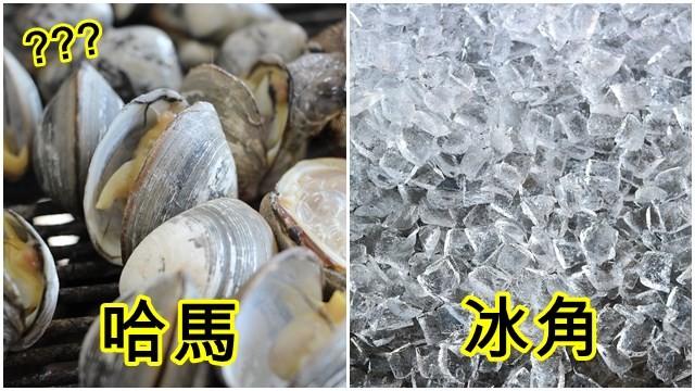 ▲▼蛤蠣,冰塊。(左圖/取自免費圖庫Pixabay/右圖/取自免費圖庫Pixabay)