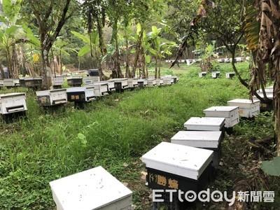 蜂農請辦理養蜂事實申報 以利後續補助