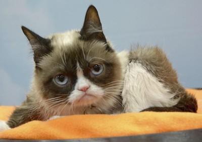 美國網紅名貓「臭臉貓」病逝