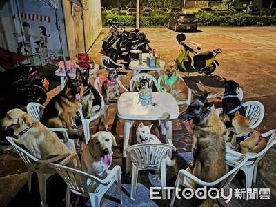 黑柴6歲生日 12陪伴犬圍坐慶生