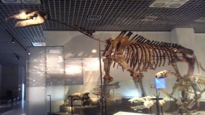 比犀牛大20倍!陸地史上最大哺乳類「太會吃」最終餓死