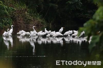 台東太平溪濕地景色美 民眾:除了垃圾