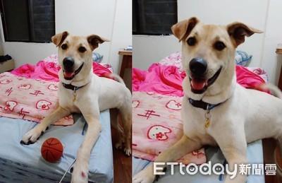 愛犬突然狂吠 2天發生自摔身亡