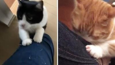 兩大品牌牛仔褲「貓咪聞了異常嗨」!網買「Gx、UNIxxx」實測:真的耶