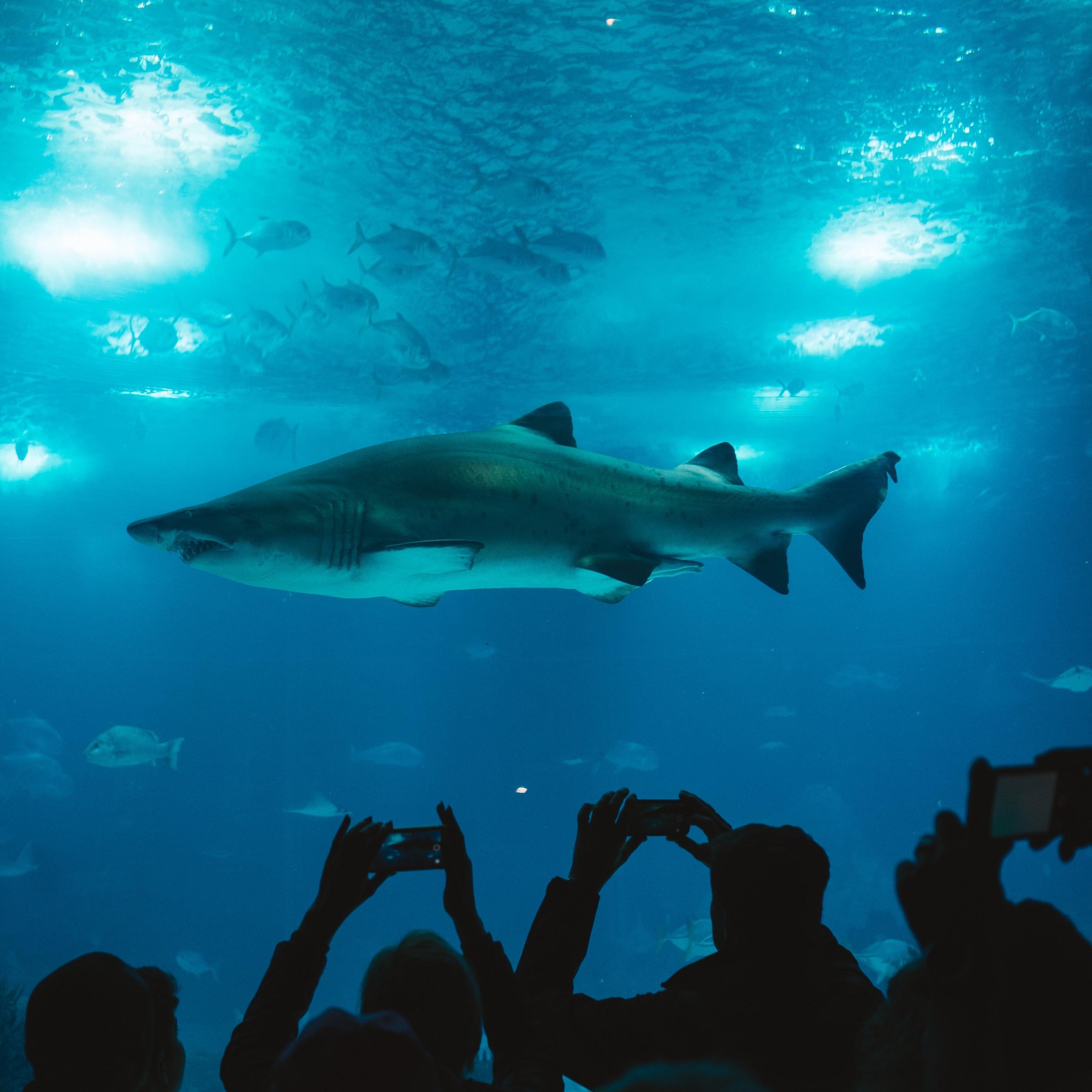 水里太危险 海豚神奇构造 两边大脑轮流睡觉 闻到危险立刻醒