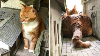門口有隻巨貓!貓斯拉一屁股坐下塞滿巷口 藝術家崩潰:修不完了