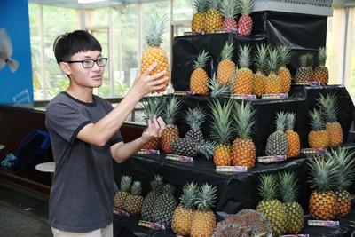 嘉大園藝百年校慶打卡鳳梨拿著吃