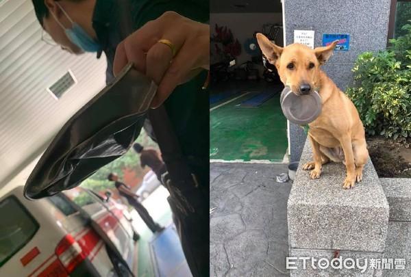救護車壓扁隊犬「鐵飯碗」! 牠無辜眼神施壓:我要申請國賠QQ
