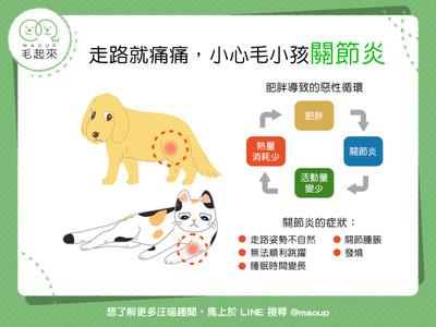 走路痛痛!「這5大點」分辨貓汪關節炎...睡眠時間變長=警訊