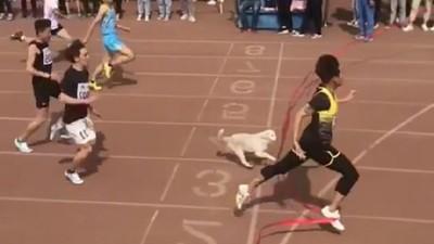短跑第三名竟被逮捕!小白狗闖運動會勇奪佳績 下一秒被拎到場外冷靜