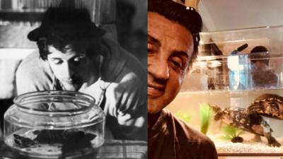 《洛基》烏龜還健在!席維斯史特龍悉心照顧44年 網笑:都是老人了