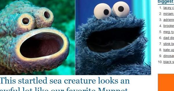 爐管海綿與「餅乾怪獸」撞臉 激似到攝影師嚇歪