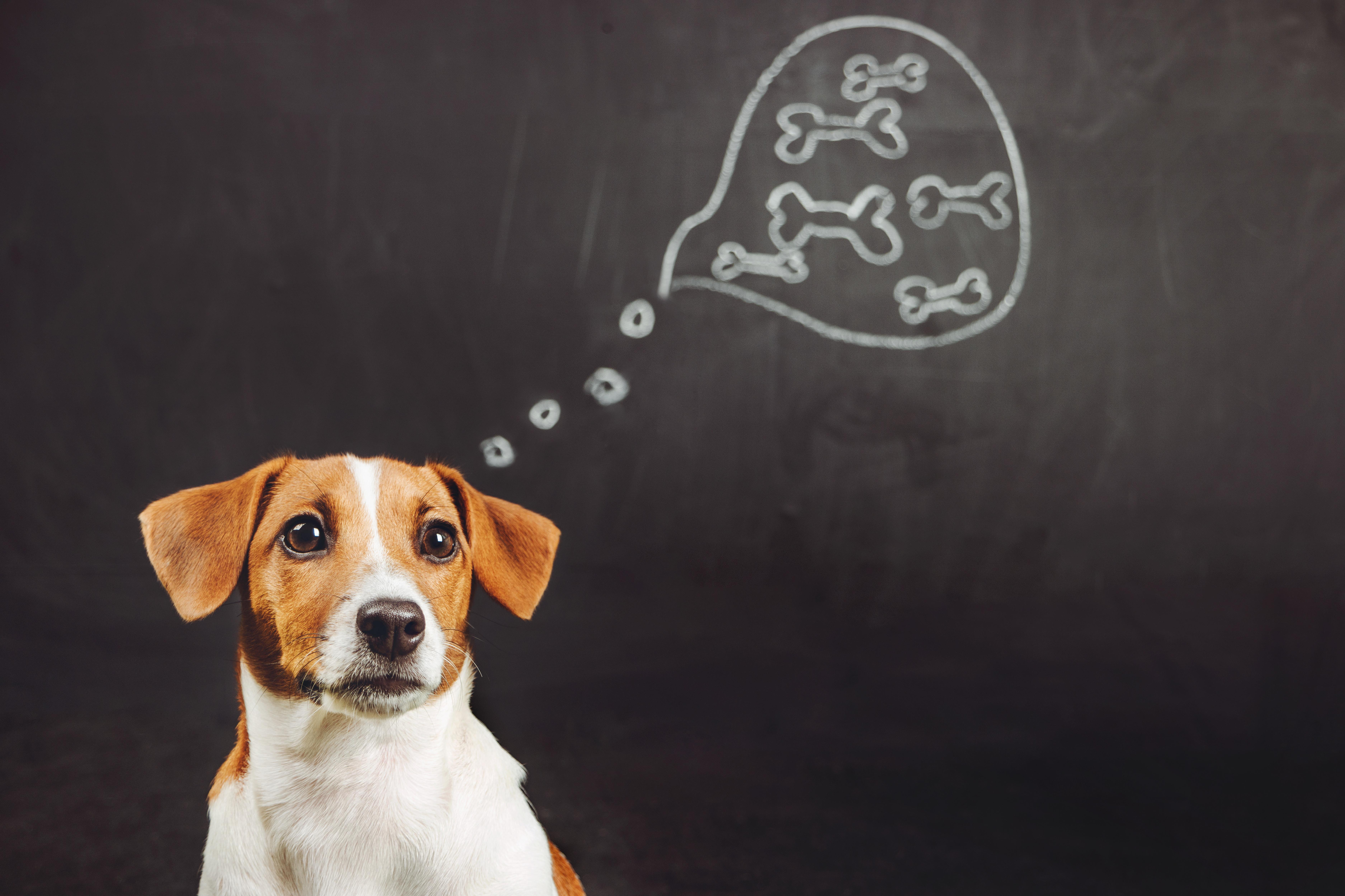 ▲▼示意圖,寵物,動物,狗,貓,萌寵,鮮食,飼料,可愛。(圖/123rf)