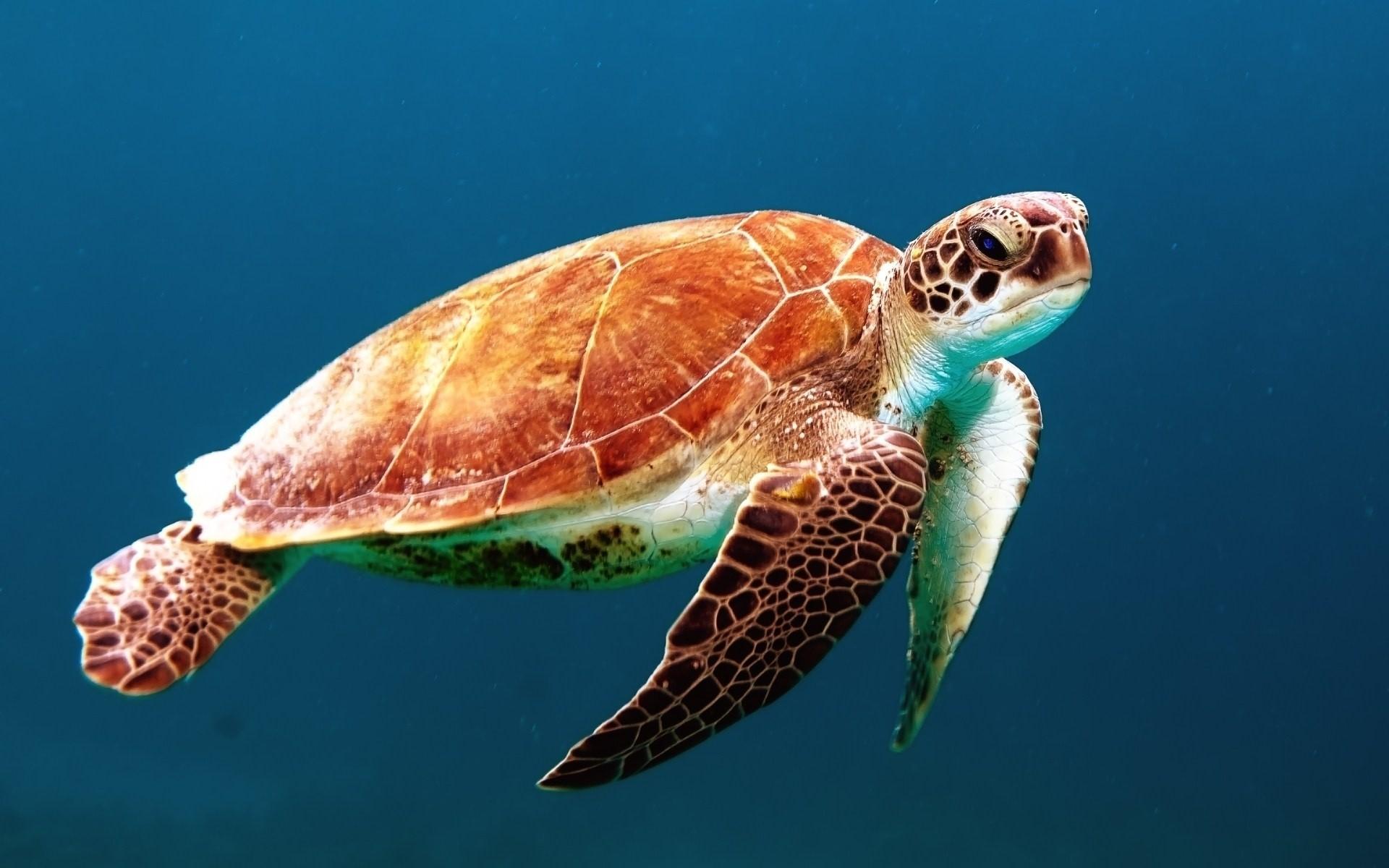 ▲▼塑膠袋、海龜。(圖/免費圖庫pxhere)