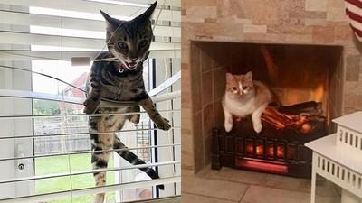 差一點氣死鏟屎官...回家看見飼料散落一地 喵皇悠哉趴在壁爐裡