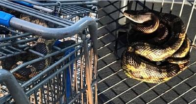 購物車竄出大蛇 他鬼叫驚動警察