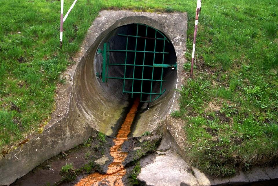 ▲▼紐約都是傳說《下水道鱷魚》。(圖/取自免費圖庫Pixabay)