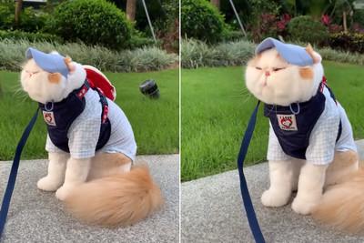 肥貓穿套裝出門 站定點吹風不動