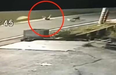 高三男騎車被狗追 摔到顱內出血