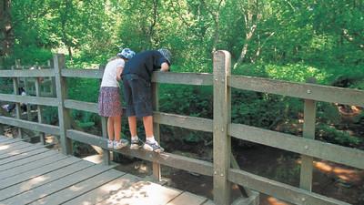 漫步「百畝森林」好夢幻!跟著維尼到「噗噗橋」 誰的棍棒先出現就贏