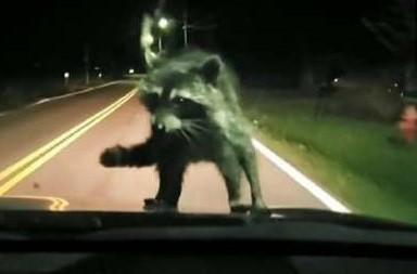 小黑影自殺攻擊擋風玻璃 全車嚇呆