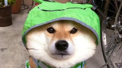 狗狗超怕劇烈聲音!煙火、打雷時「獨自在家」 恐會嚇到呼吸急促