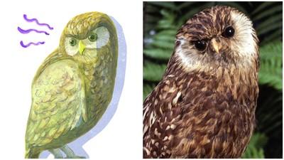 曾稱霸紐西蘭 笑鴞絕種原因超荒謬:「笑聲太大」引來狩獵者