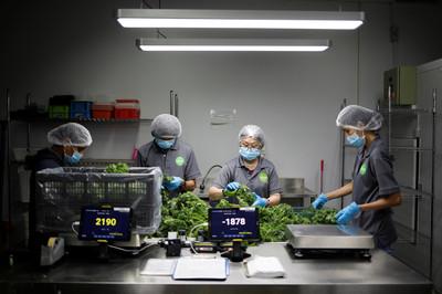 8顆蝦餃15萬!新加坡養出「實驗室蝦」