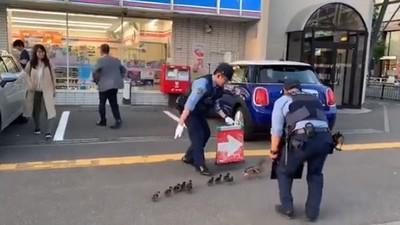 警察護送小鴨過馬路!手持箭號左推右推 民眾笑:出大事啦