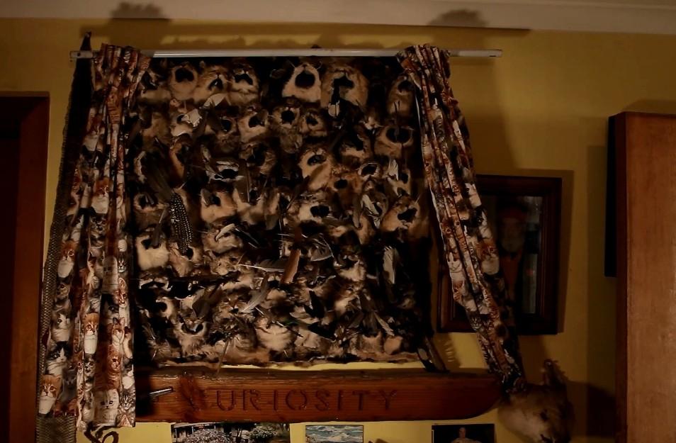 ▲▼67歲老翁20年撲殺了1500隻貓。(圖/翻攝自YouTube/XIGuyIX)
