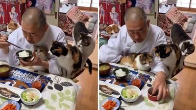 住持好忙!吃早餐「同步餵食4隻喵」 貓皇超有禮貌:是好了沒啦