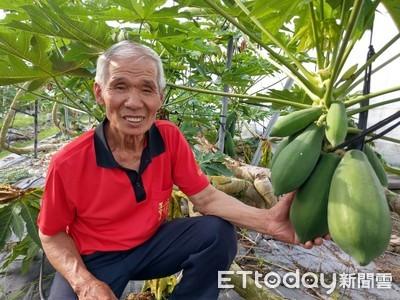 通過全球驗證 洪瑞清生產世界級木瓜