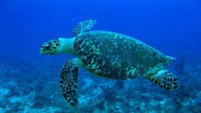 海龜擱淺搶時救援!救龜龜專線打「118」 全年無休專人出動