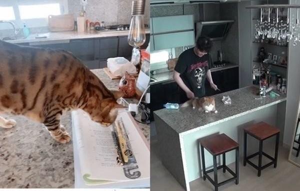 ▲尹鈞相被爆交往小7歲女大生!貓咪露餡...公司認了對方有去他家。(圖/翻攝自IG、tvN)