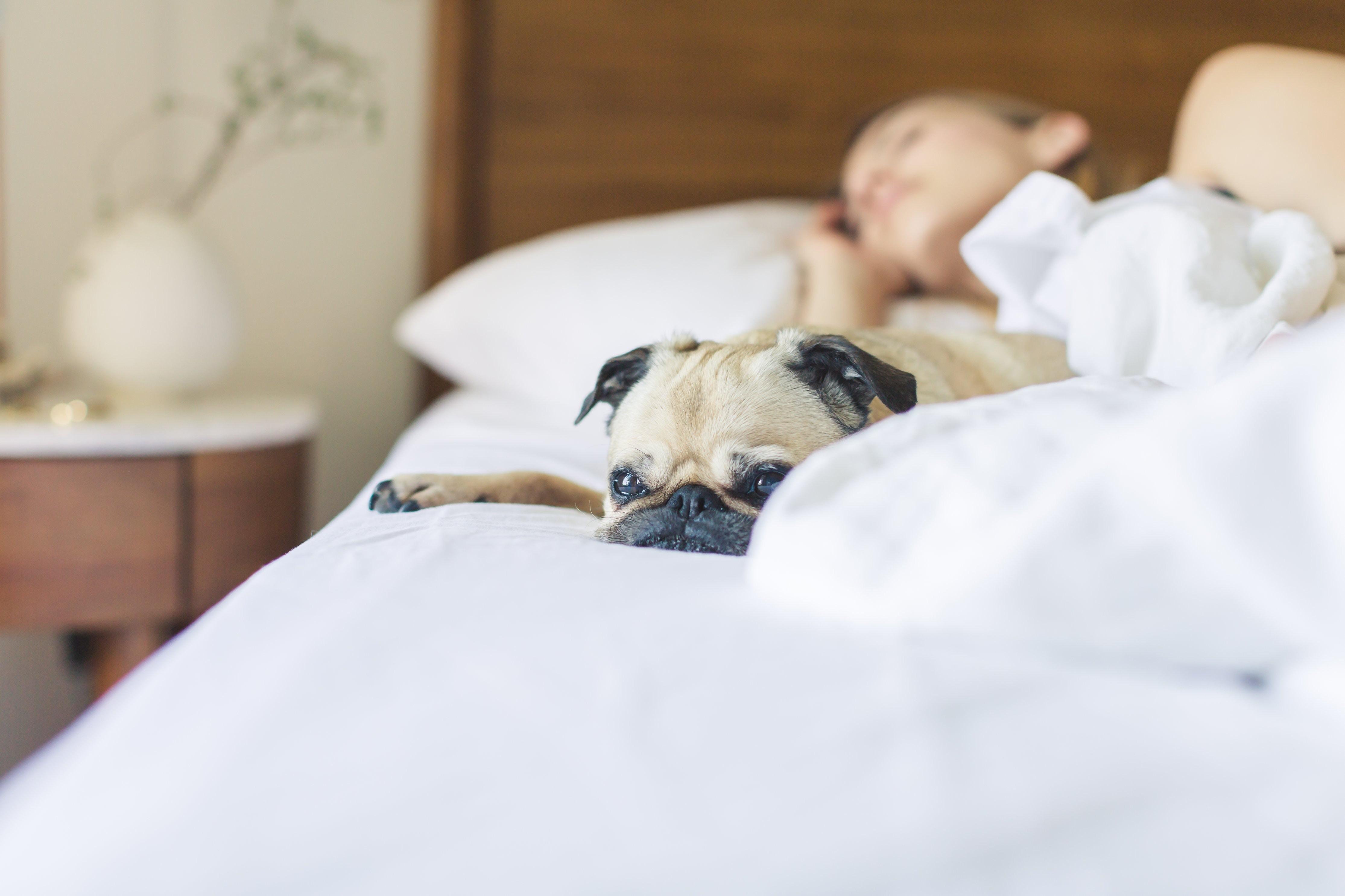 ▲▼狗,貓,睡覺。(圖/Pexels)
