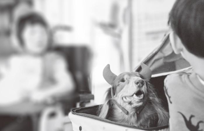 ▲▼書籍《我很瞎,我是小米酒:台灣第一隻全盲狗醫生的勵志犬生》。(圖/橡樹林出版提供,請勿隨意翻拍,以免侵權。)
