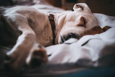 研究顯示:女生和毛小孩一起睡更好眠!貓奴看結果...只能笑笑der