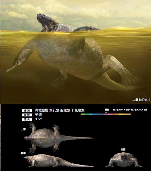 ▲真實尺寸的古生物圖鑑˙古生代篇。(圖/如何出版提供)