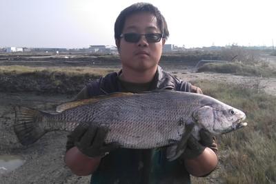 不怕沒錢吃不到珍貴鮸魚 專家成功量產魚苗