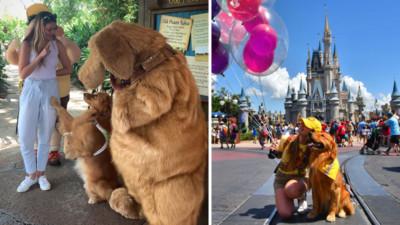 看到角色很興奮!工作犬多次進迪士尼訓練 終於擺脫誘惑找回專業