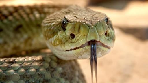 ▲▼蛇。(圖/翻攝自維基百科)