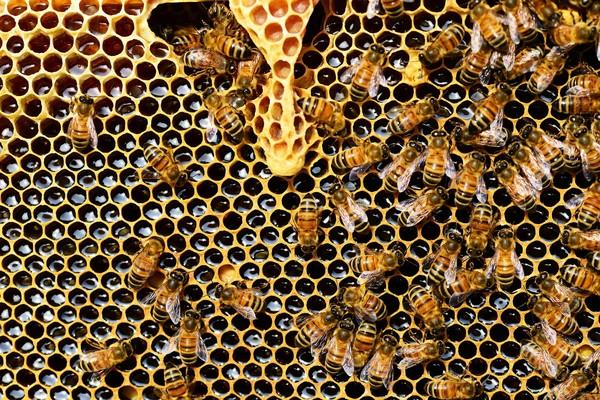 ▲蜂蜜到底是怎麼來的?(圖/PIXABAY)