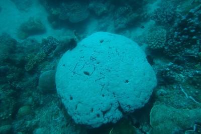 小琉球活珊瑚遭刻名留念 網美被肉搜