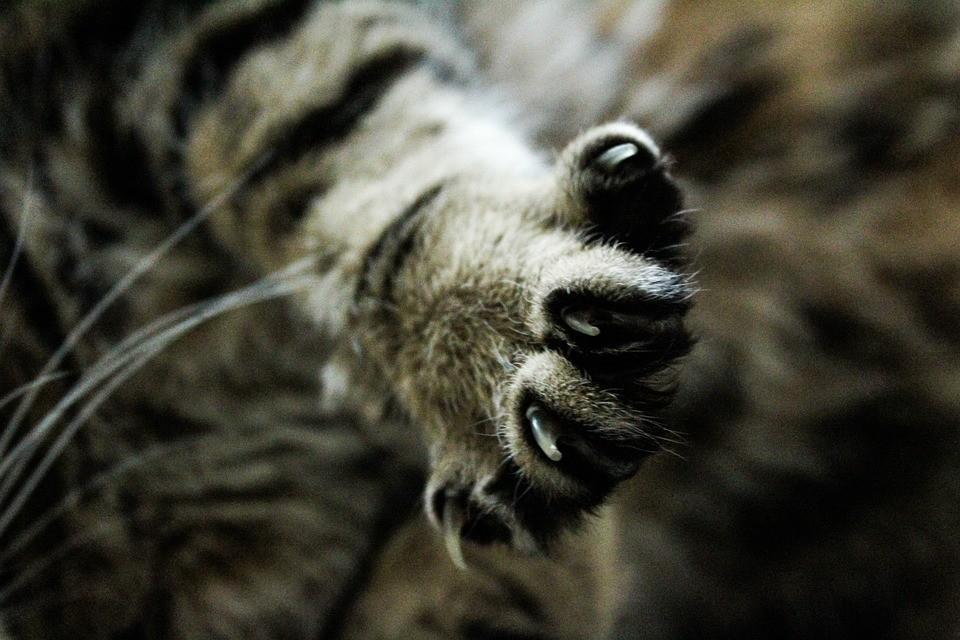 ▲▼貓,貓咪,貓掌。(圖/取自免費圖庫Pexels)