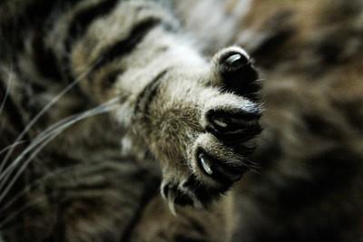 貓咪見指甲刀就氣噗噗!這幾招讓主子乖乖被剪 行為醫師:練習保定+獎勵很重要